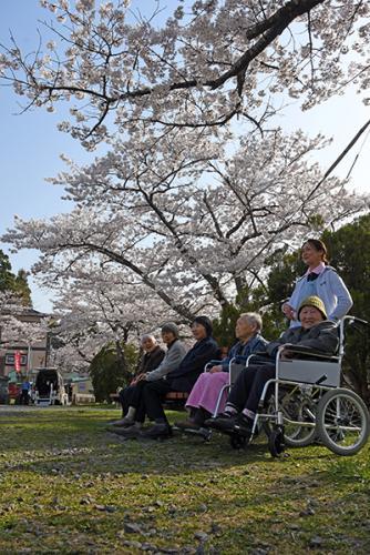 画像:桜が満開に!!!