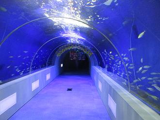 画像:もぐらんぴあトンネル水槽リニューアル